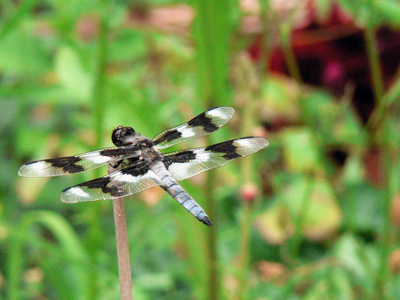 Some Cool Dragonfly